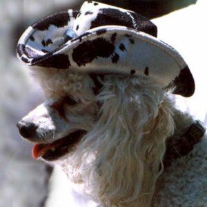Pony Print K-9 Kowboy Hat