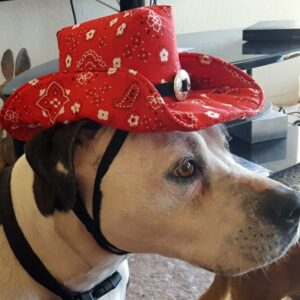 Red Bandana K-9 Kowboy Hat