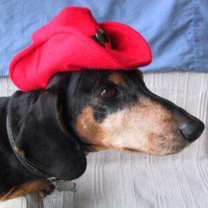 Red K-9 Kowboy Hat